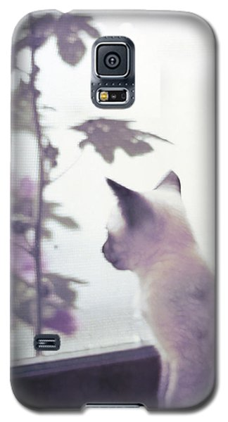 Baby Siamese Kitten Galaxy S5 Case