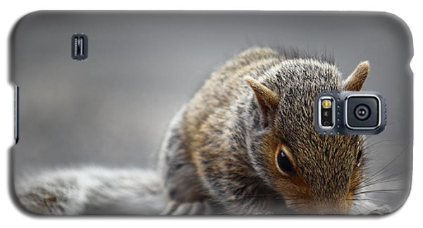 Baby Squirrel Gets A Snack Galaxy S5 Case by Andrew Pacheco
