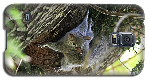 Galaxy S5 Case featuring the photograph Baby Squirrel On The Loose by Trina  Ansel