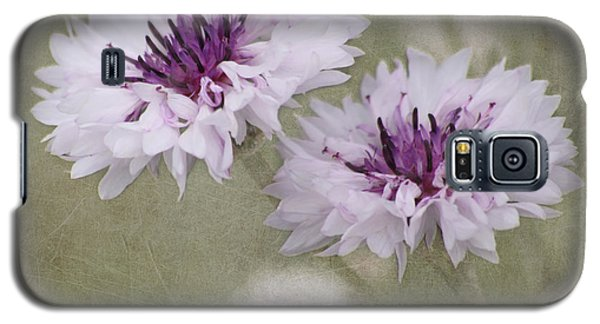 Bachelor Buttons - Flowers Galaxy S5 Case by Kim Hojnacki