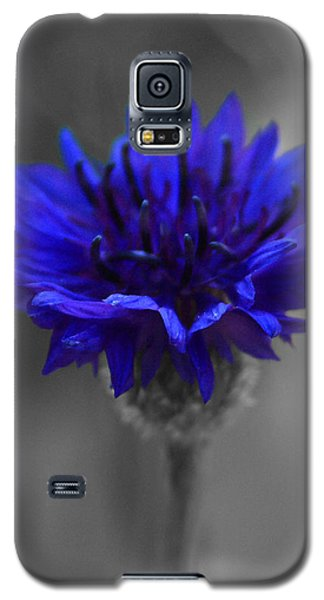 Bachelor's Button Galaxy S5 Case