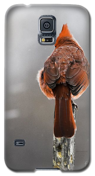 Back At You Galaxy S5 Case