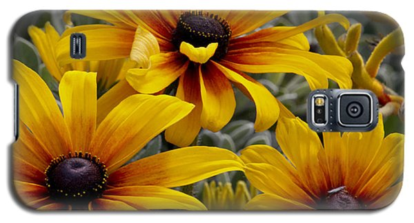 Galaxy S5 Case featuring the photograph Back-eyed-susan by Ivete Basso Photography