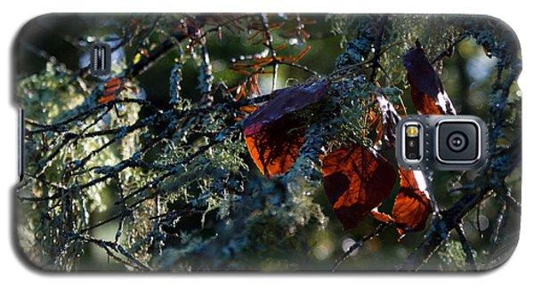 Back Lit Autumn Leaves Galaxy S5 Case