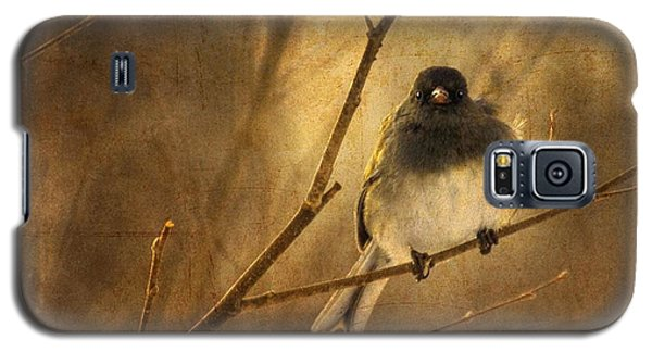 Backlit Birdie Being Buffeted  Galaxy S5 Case