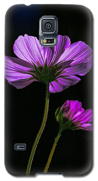 Backlit Blossoms Galaxy S5 Case