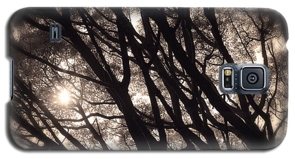Backlit Branches Of A Majestic Tree I Galaxy S5 Case