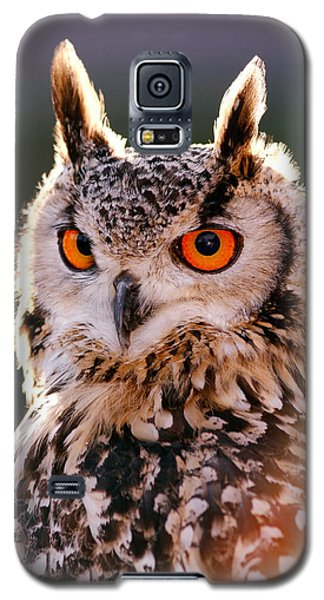 Backlit Eagle Owl Galaxy S5 Case by Roeselien Raimond