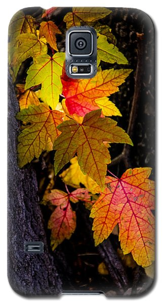 Backlit Leaves Galaxy S5 Case by Janis Knight