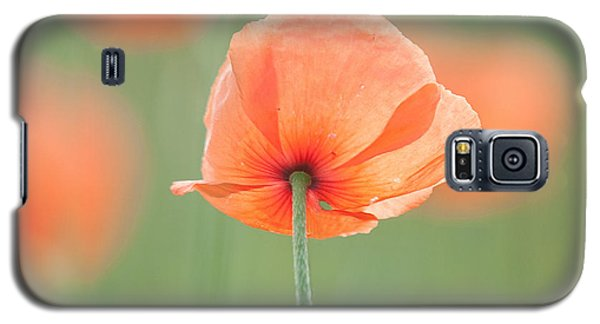 Backlit Poppies Galaxy S5 Case