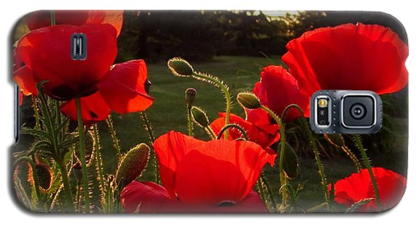 Backlit Red Poppies Galaxy S5 Case by Mary Wolf