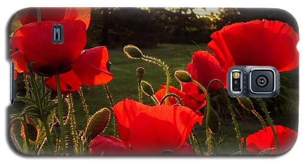 Backlit Red Poppies Galaxy S5 Case