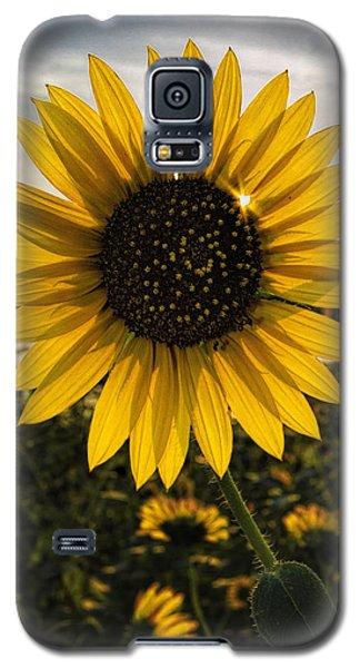 Backlit Sunflower Galaxy S5 Case