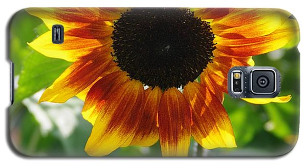 Backlit Sunflower Galaxy S5 Case