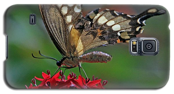 Galaxy S5 Case featuring the photograph Backlit Swallowtail by Larry Nieland
