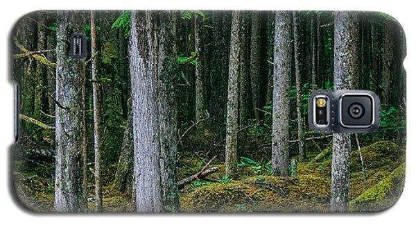 Inside View Backroad Forest Galaxy S5 Case