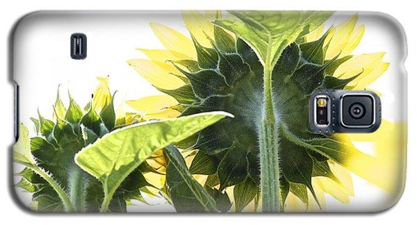 Backside Of Sunflower Galaxy S5 Case