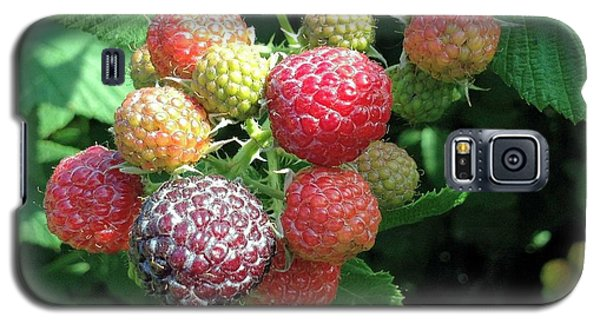 Galaxy S5 Case featuring the photograph Fruit- Black Raspberries - Luther Fine Art by Luther Fine Art