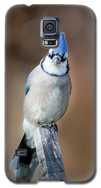 Backyard Birds Blue Jay Galaxy S5 Case by Bill Wakeley