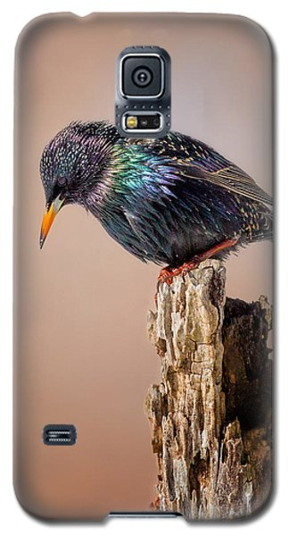 Backyard Birds European Starling Galaxy S5 Case by Bill Wakeley