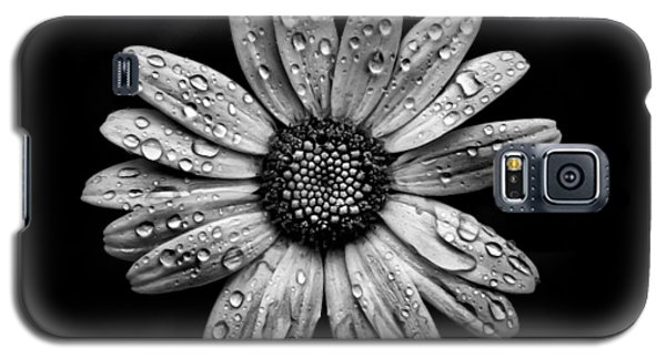 Galaxy S5 Case featuring the photograph Backyard Flowers In Black And White 16 After The Storm by Brian Carson