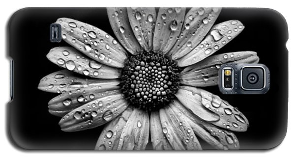Backyard Flowers In Black And White 16 After The Storm Galaxy S5 Case