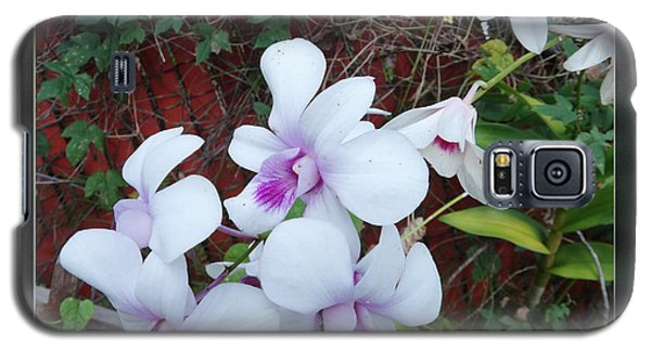 Galaxy S5 Case featuring the photograph Backyard Orchid Two by Ginny Schmidt