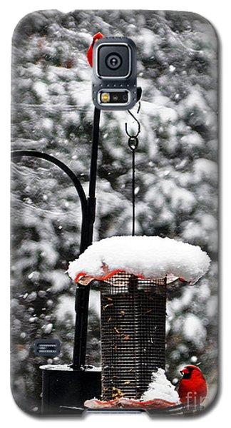 Backyard Winter Wonderland 2  Galaxy S5 Case by Lydia Holly