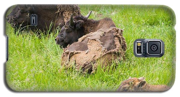 Bison Bad Fur Day Galaxy S5 Case