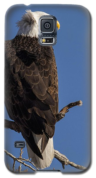 Galaxy S5 Case featuring the photograph Bald Eagle 1 by Rob Graham