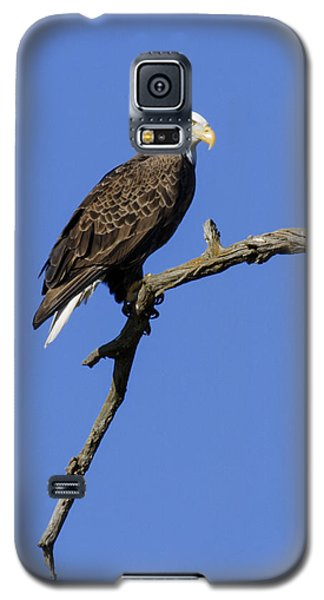Galaxy S5 Case featuring the photograph Bald Eagle 4 by David Lester