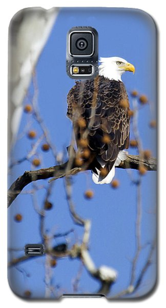 Galaxy S5 Case featuring the photograph Bald Eagle by David Lester