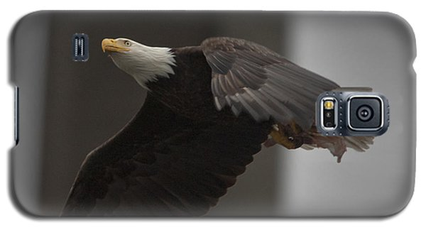 Bald Eagle In Flight Galaxy S5 Case