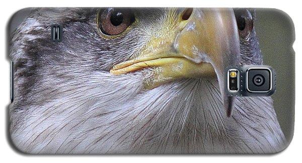 Bald Eagle - Juvenile Galaxy S5 Case
