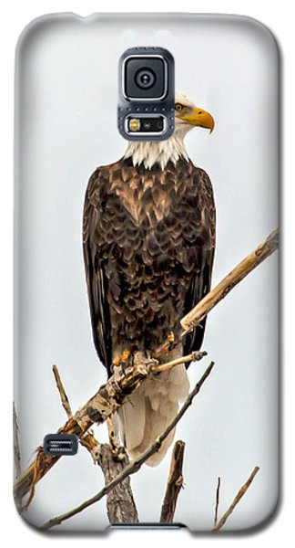 Bald Eagle On A Branch Galaxy S5 Case