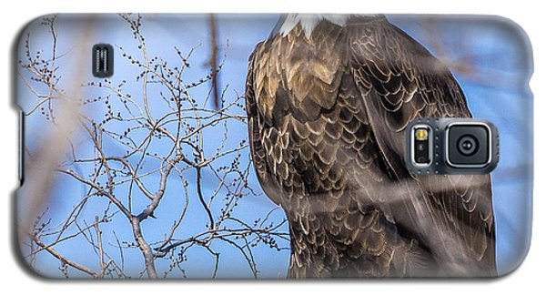 Bald Eagle On The Iowa River Galaxy S5 Case