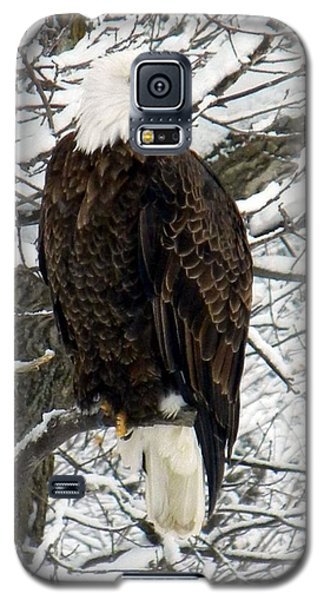 Galaxy S5 Case featuring the photograph Bald Eagle by Penny Meyers
