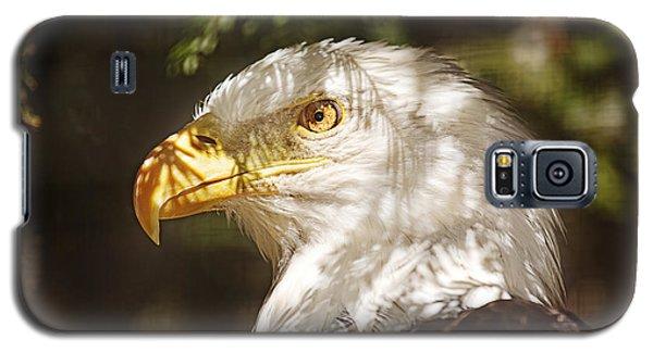 Bald Eagle Portrait  Galaxy S5 Case