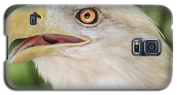 American Bald Eagle Portrait - Bright Eye Galaxy S5 Case by Patti Deters