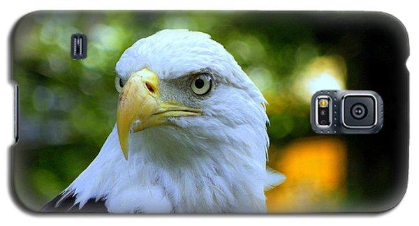 Bald Eagle Galaxy S5 Case by Terri Mills