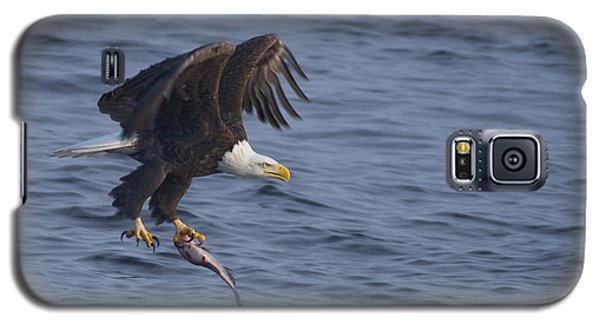 Bald Eagle With A Fish Galaxy S5 Case