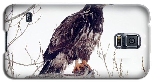 Galaxy S5 Case featuring the photograph Bald Eagle by Zinvolle Art