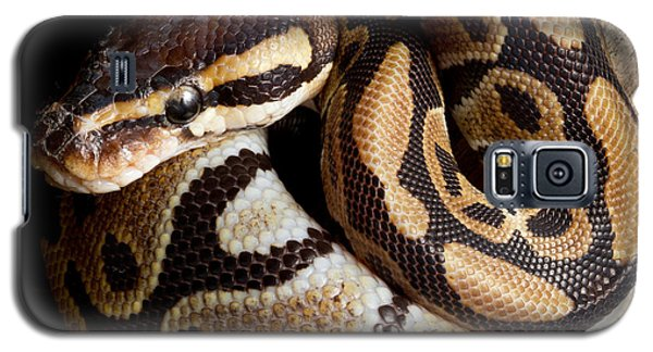 Galaxy S5 Case featuring the photograph Ball Python Python Regius by David Kenny