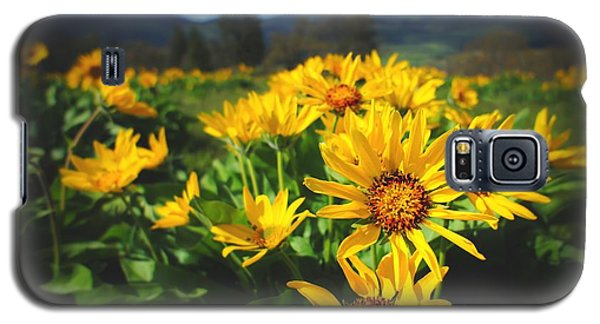 Balsamroot Of The Gorge Galaxy S5 Case by TK Goforth