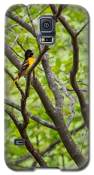 Baltimore Oriole Galaxy S5 Case by Bill Wakeley