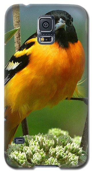 Oriole Galaxy S5 Case - Baltimore Oriole by Bruce Morrison