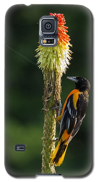 Galaxy S5 Case featuring the photograph Baltimore Oriole Delight 2 by David Lester