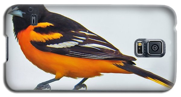Galaxy S5 Case featuring the photograph Baltimore Oriole Male by Judy Via-Wolff