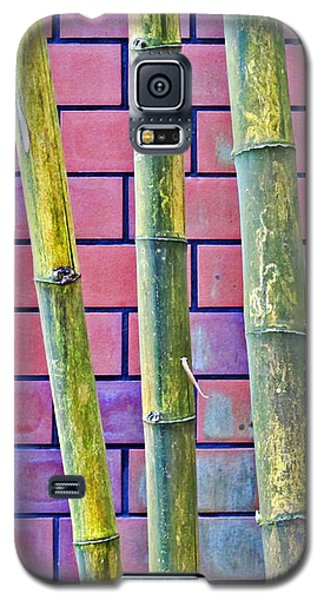 Bamboo And Brick Galaxy S5 Case by Ethna Gillespie