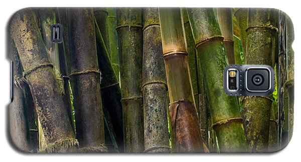 Galaxy S5 Case featuring the photograph Bamboo by Avian Resources